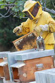 Beekeeper and beehives — Stock Photo