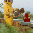 Stock Photo: Beekeeper looks at camerwith honeycomb