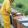 Beekeeper smoking a beehive — Stock Photo