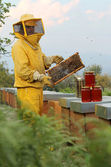 Beekeeper looks at camera with honeycomb — Stockfoto