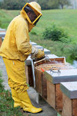 Beekeeper smoking a beehive — Stockfoto