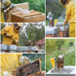 Beekeeping collage — Stock Photo #13270071