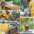 Stock Photo: Beekeeping collage