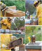 Beekeeping collage — Stockfoto