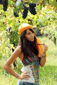 在葡萄园中的美丽的女孩姿势 — 图库照片