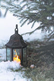 Lighted lantern under an evergreen — Stock Photo