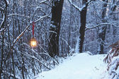 Lantern in a winter and snowy forest — Stock Photo