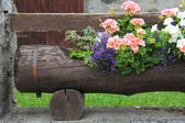 Brown tree trunk used as a vase for beautiful flowers — Stock Photo