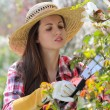 Attractive woman pruning plants - Stock Photo