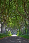Magical forest of Dark Hedges — Stock Photo