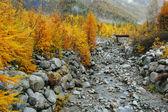 Mountain stream och höst färger — Stockfoto