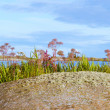 Beautiful small island in archipelago — Stock Photo #13367165