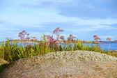 Beautiful small island in the archipelago — Stockfoto
