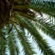 Palm trees photographed from below — Stock Photo