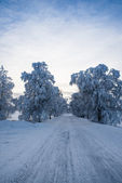 Beautiful winter road — Stock Photo