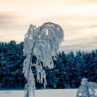 Beautiful frosted trees against a yellow evening sky - Stock Photo