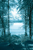 Winter picture of the foggy lake — Stock Photo