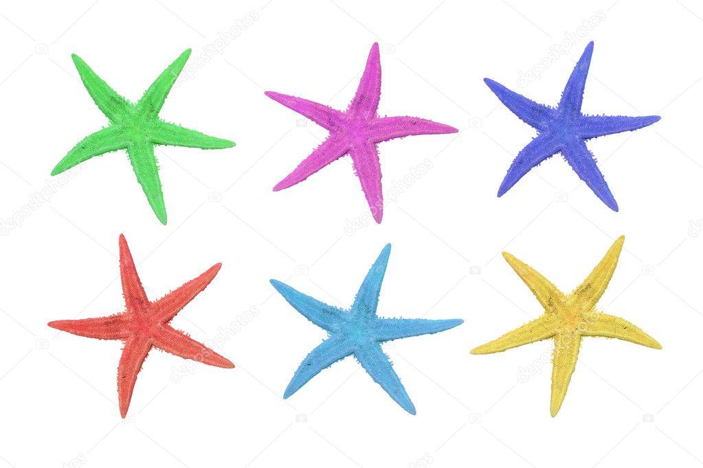 Seis color estrella de mar sobre un fondo blanco - Imagen de stock