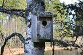 Beautiful old bird nest — Stock Photo