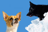 Dois cães doces e bonitos, com um céu azul ao fundo — Foto Stock