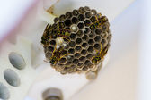 Wasp nest with several wasps — Stock Photo