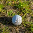 Lonely abandoned golf ball — Stock Photo