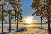 Beautiful winter picture of a lake with pine trees in the foregr — Stockfoto