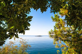 Views through the forest on a calm sea and with a clear blue sky — Stock Photo