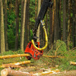 Felling of the forest — ストック写真