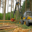 Stock Photo: Felling of forest