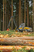 Felling of the forest — Stock Photo
