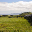 Stock Photo: Pastrue landscape, Sao Jorge