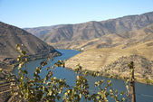 Vineyards at Douro river valley, Portugal — Stock Photo