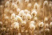 Dry golden and soft spare of grass — Foto Stock