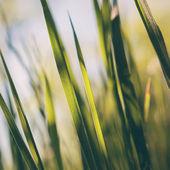 Concept of spring. Freshness, new life, bliss. — Stock Photo