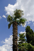 Palm tree and sky — Stock Photo