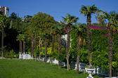 在林间空地上的棕榈树 — 图库照片