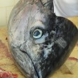 Tunfish head — Stock Photo #13491667