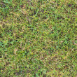 Green grass for background - Foto Stock