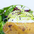 Baked potato filled with sour cream and onion cress — Stock Photo