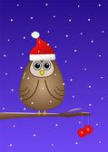 Owl at Christmas — Stock Photo