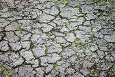 地面裂缝和绿草 — 图库照片