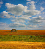 Landscape with field tree and clouds — Stock Photo