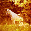 Stock Photo: White horse on wood glade