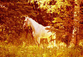White horse on wood glade — Stock Photo