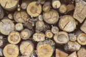 Pnie drzew w woodpile — Zdjęcie stockowe