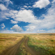 Landscape with field and the sky — Stock Photo