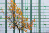Tree with yellow leaves against building facade — Stock Photo
