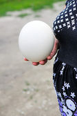 Ostrich's egg — Stock Photo