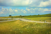 Landscape with field and road fork — Stock Photo